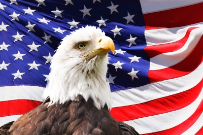 Bald Eagle with a USA flag in the background